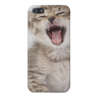 Kitten Iphone Case Case For iPhone 5