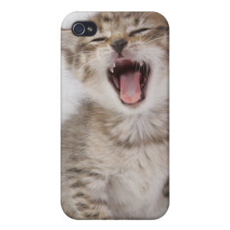 Kitten Iphone Case iPhone 4 Cases