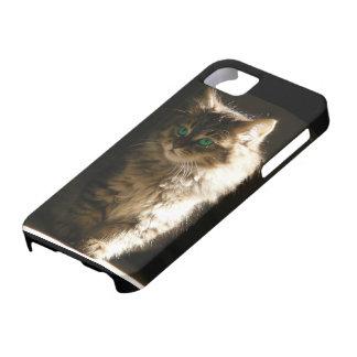 Kitten iPhone SE/5/5s Case