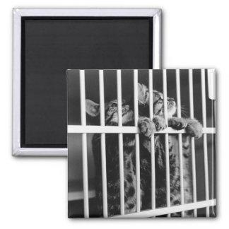 Kitten Jail Magnet