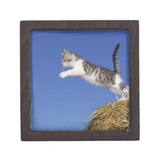 Kitten Jumping 2 Gift Box