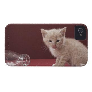 Kitten licking spilt milk from bottle Case-Mate iPhone 4 case