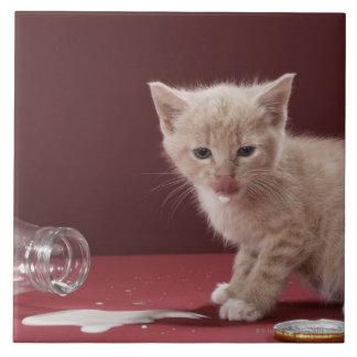Kitten licking spilt milk from bottle ceramic tile