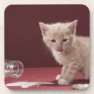 Kitten licking spilt milk from bottle coaster