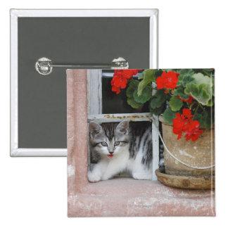 Kitten Looking Out Window Pinback Button