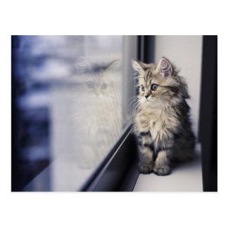 Kitten Looking Out Window Postcard