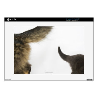 Kitten Looking up at its Mother's Tail Decals For Laptops