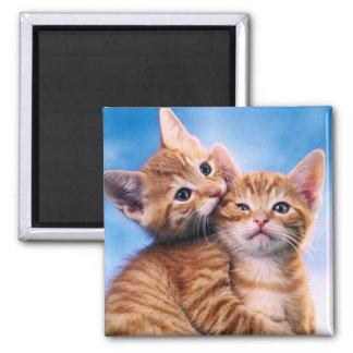 Kitten Love 2 Inch Square Magnet