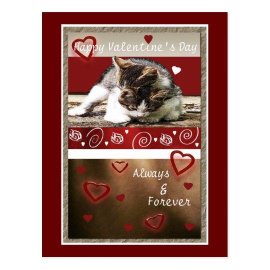 Kitten Love Valentine Postcard