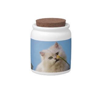 Kitten loving the daffodil candy jar