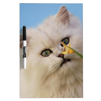 Kitten loving the daffodil dry erase board
