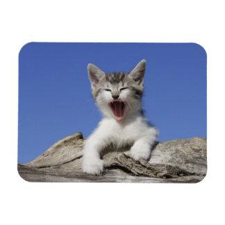 Kitten lying on log, yawning, close-up magnet