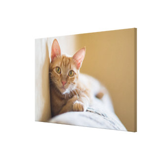 Kitten Lying On The Couch Canvas Print