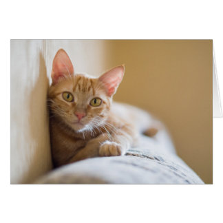 Kitten Lying On The Couch Card