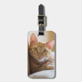 Kitten Lying On The Couch Luggage Tag