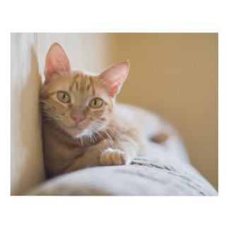 Kitten Lying On The Couch Panel Wall Art