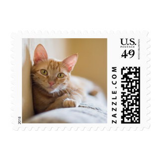 Kitten Lying On The Couch Postage