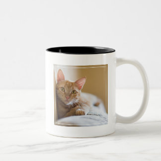 Kitten Lying On The Couch Two-Tone Coffee Mug