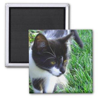 Kitten magnet magnet