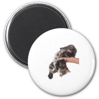 kitten magnet