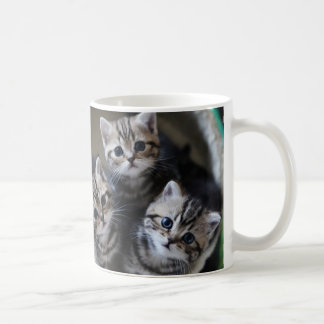 Kitten magnetic cup of the American short hair 3 Classic White Coffee Mug