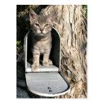 Kitten mail post cards