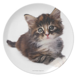 Kitten Melamine Plate