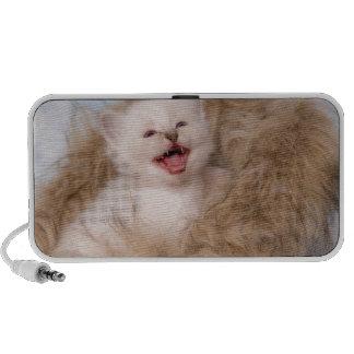kitten meowing mp3 speakers