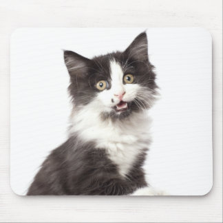 kitten meows mouse pad