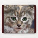 Kitten mousepad 2