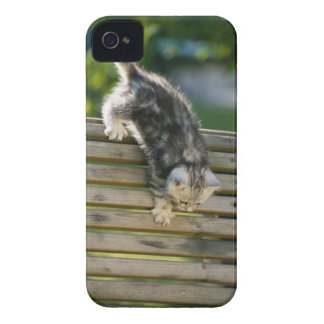 Kitten moving down on bench iPhone 4 cover