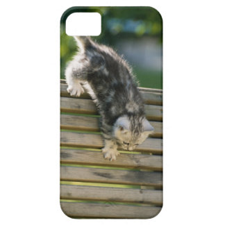 Kitten moving down on bench iPhone SE/5/5s case