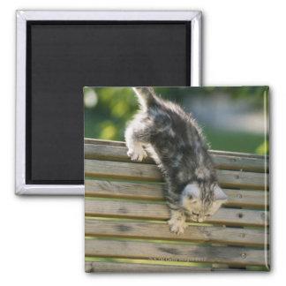 Kitten moving down on bench magnet
