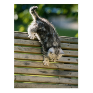 Kitten moving down on bench postcard