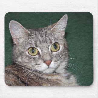 kitten mug mouse pads