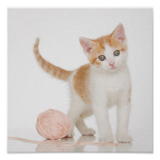 Kitten Next To Ball Of String Poster