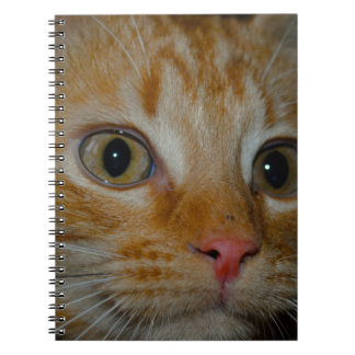 Kitten Spiral Note Book