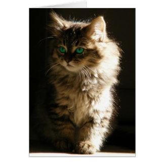 Kitten NoteCards Card