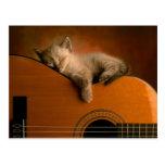 kitten-on-guitar postcard