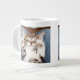 Kitten on lap. giant coffee mug