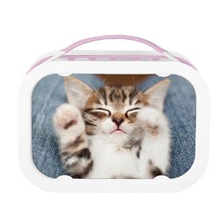 Kitten on lap. lunch box