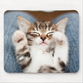 Kitten on lap. mouse pad
