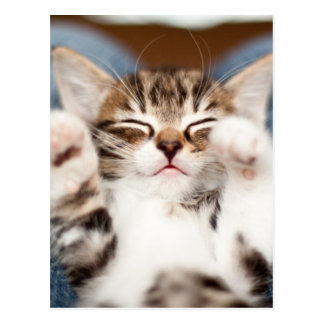 Kitten on lap. post card