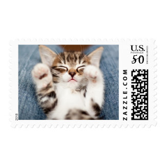 Kitten on lap. postage