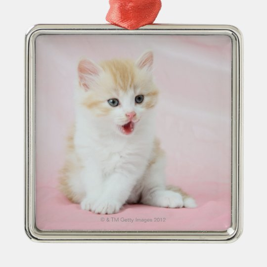 Kitten on Pink Background Metal Ornament