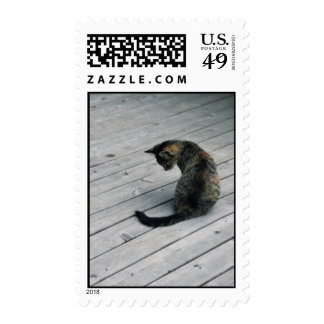 Kitten on the Deck Stamps