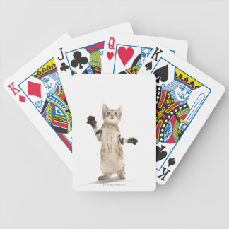 Kitten on White Background Bicycle Playing Cards