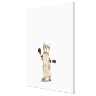 Kitten on white background canvas print