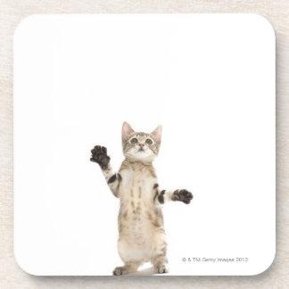 Kitten on white background beverage coasters