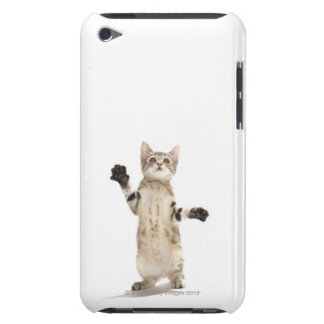 Kitten on white background iPod touch case